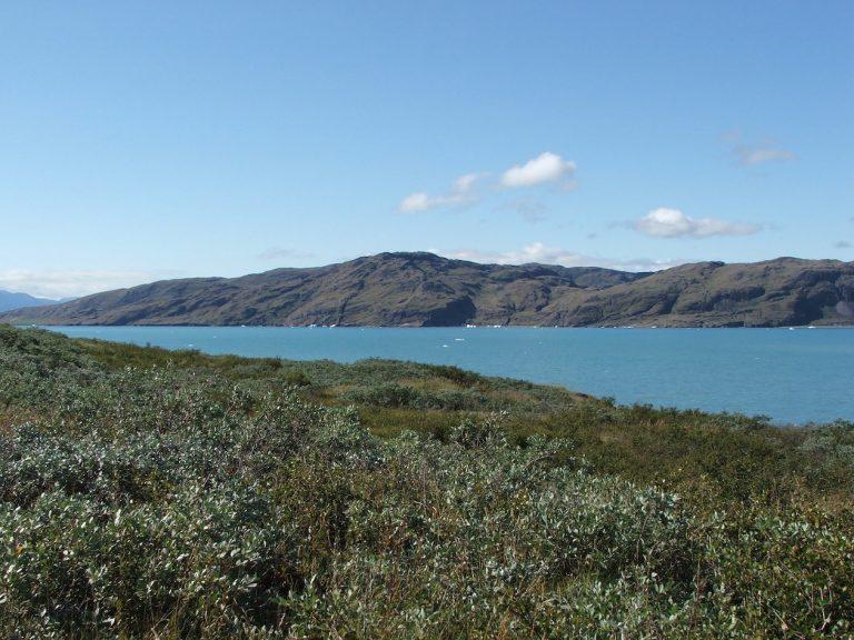 South Greenland vegetation