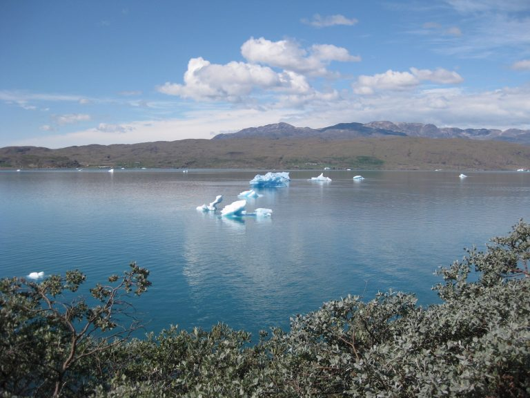 Small icebergs floating past shrubbery in south Greenland