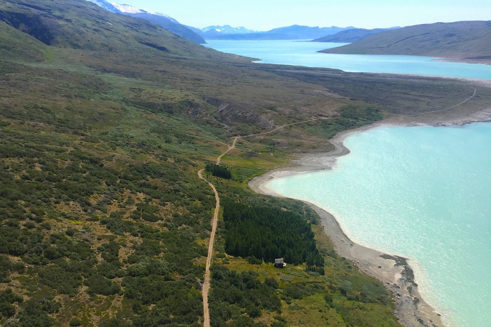 Image result for Greenland forest