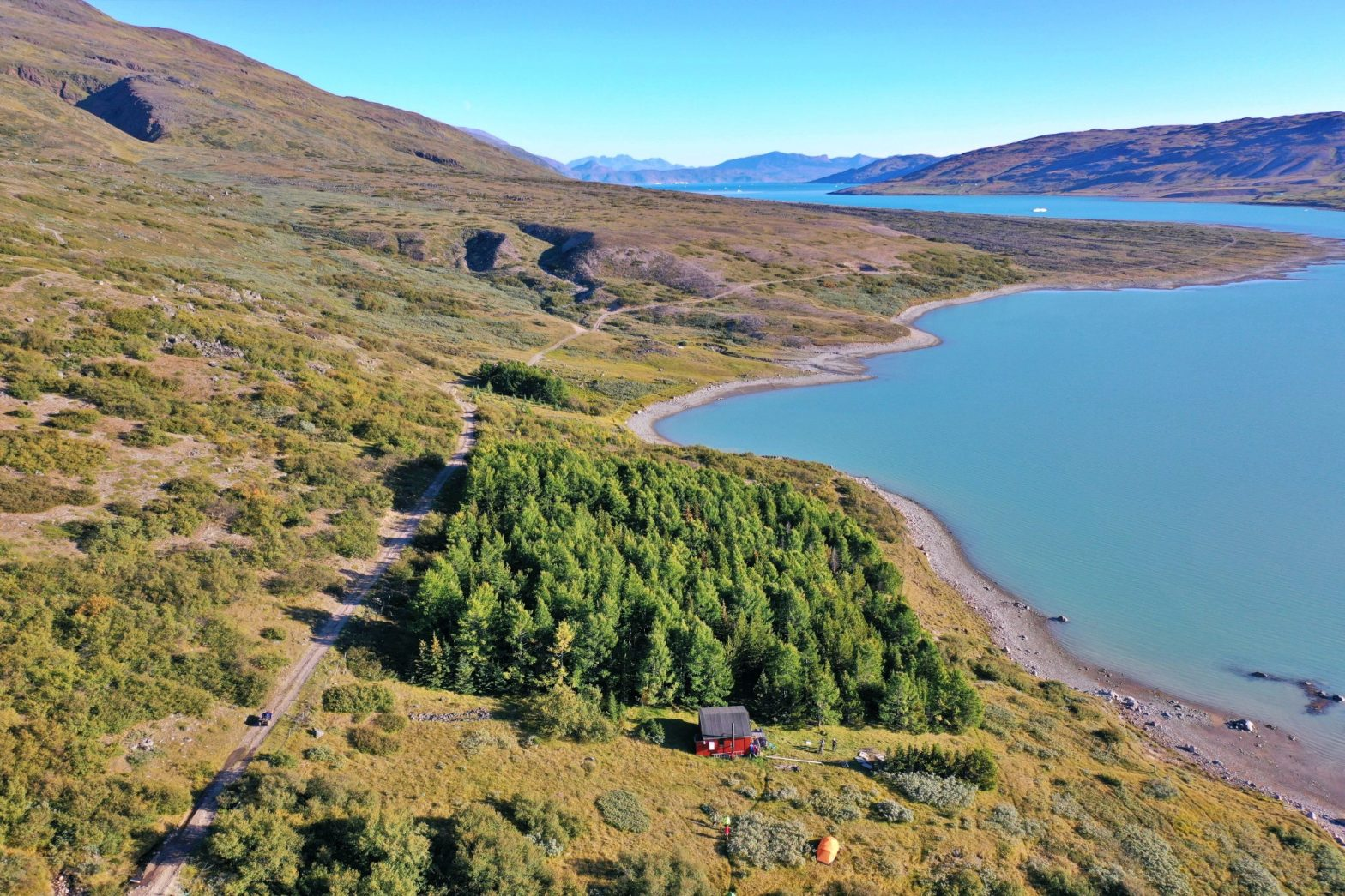 Greenland Trees - Carbon drawdown for a green planet